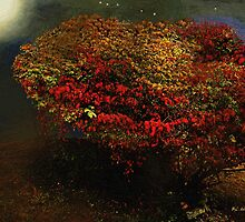 Autumn Approaches by RC deWinter