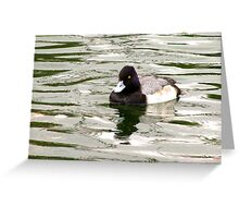 Lesser Scaup ~ Male Greeting Card