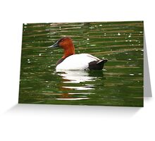 Canvasback ~ Male Greeting Card