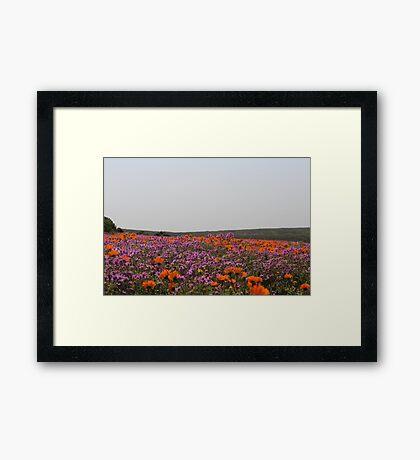 Veld Flowers Framed Print