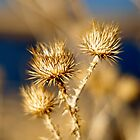 Thistle Bokeh by Gary Taylor