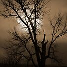 Tree Shadow by Gary Taylor