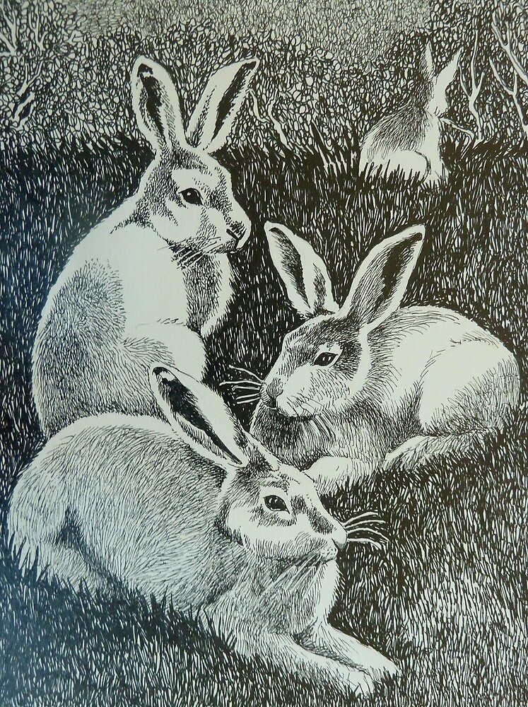 Four Bunnies by Sally Sargent