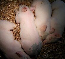 Siblings - Kensington Farm Center by Joy Fitzhorn