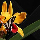Zebra Swallowtail on Orchid by Linda  Makiej Photography