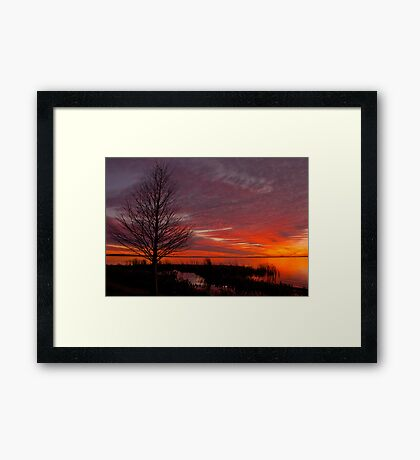 Cypress Silhouette Framed Print