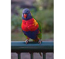 Rainbow Lorikeet digital art Photographic Print