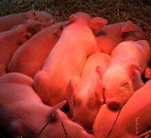 Keeping Warm - Kensington Farm Center by Joy Fitzhorn