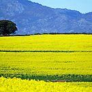 Fields - South Africa by Leon Heyns