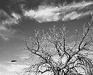 Flight by Leon Heyns