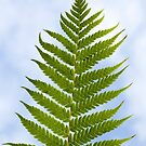 { fern in the sky } by Brooke Reynolds
