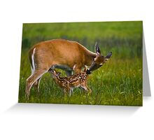 Nursing Whitetail Fawn Greeting Card