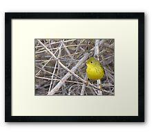 Yellow Warbler ~ Adult Framed Print