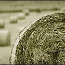 Make Hay while the Sun Shines by Kym Howard