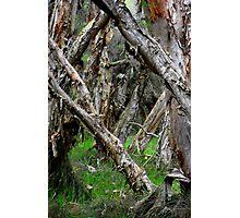 Capel Cemetery Grounds WesternAustralia Photographic Print