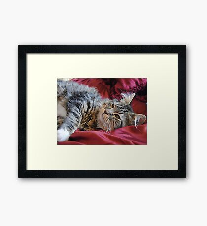 Emma Cat Playing Framed Print