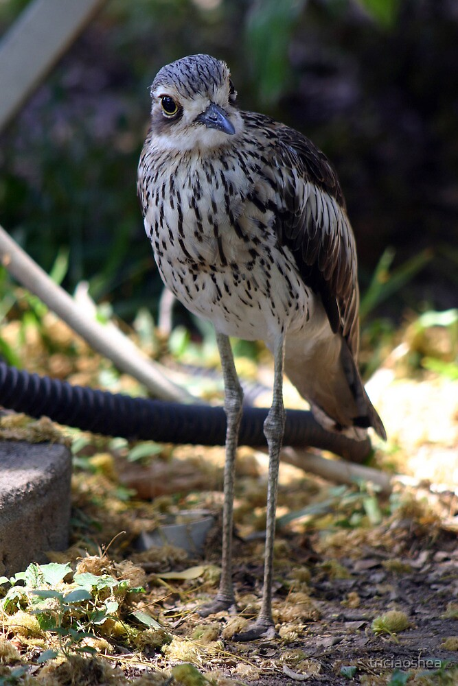 Bush-thick Knee by triciaoshea