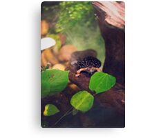 Turtle Saying Hello Canvas Print