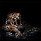 Sumatran Tigers by ArtX