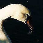 Glancing swan by MichelleRees