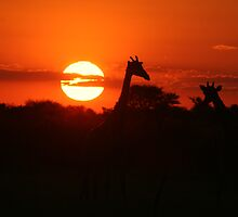 Sunset Necks by Donald  Mavor