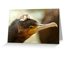 Great Cormorant II Greeting Card