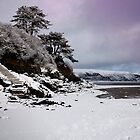 December Snow on the Harbour Beach by Turtle  Photography