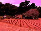 """""""Farm Rouge"""" by waddleudo"""