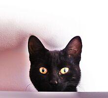 Watching Me, Watching You by Ladymoose