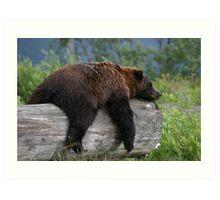 Bear Sleeping Art Print