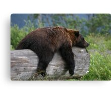 Bear Sleeping Canvas Print