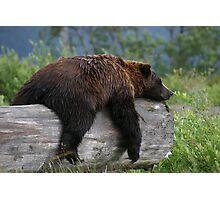 Bear Sleeping Photographic Print