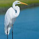 Great White Egret In Formal Ware by Joe Jennelle