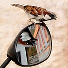 Bird on a Mirror by lamiel