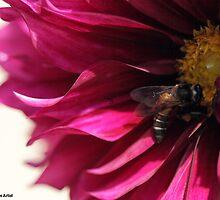Floral Dhaliya by HamimCHOWDHURY