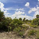 Barrier Island Ecosystem by Bill Wetmore