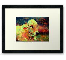 cow lying down Framed Print