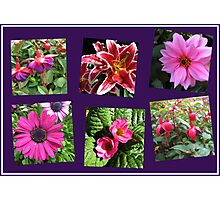 Pink Summer Flowers Collage on Purple Background Photographic Print
