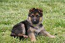 Sweet Puppy II by Sandy Keeton