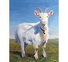 It's Just Me - Quirky Painting of a White Goat Photographic Print