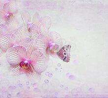 Orchid Bubbles by Maria Dryfhout
