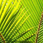 Caribbean Palms In The Sunlight by Lorna81