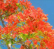 Flamboyant Tree Against Blue Sky by Lorna81