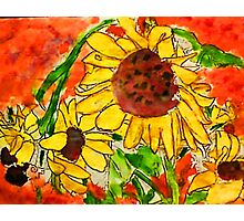 Crazy Daisey having a Hard Day, watercolor Photographic Print