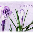 Spring is here by Olga
