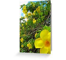 Allamanda Hedge - Grenada, Caribbean Greeting Card