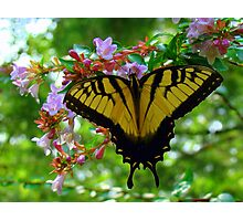Summertime Fun Butterfly Photographic Print