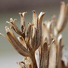 winter weed by katpartridge