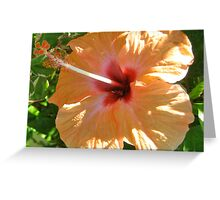 Peach Hibiscus With Insect - Grenada Greeting Card