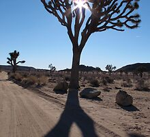 Stately Joshua Tree  by Angel LaCanfora